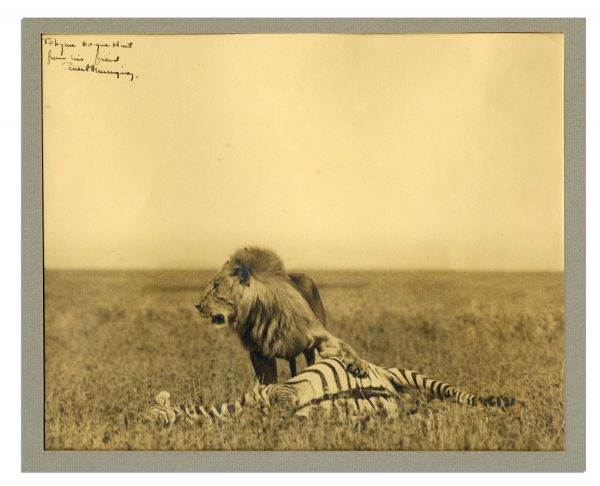 Three Stories Ten Poems Amazing Ernest Hemingway Signed Photograph of a Lion and Its Hunt While on Safari -- Large Photograph Measures 11'' x 9''
