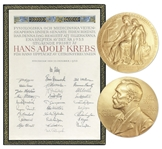 Nobel Prize Awarded to Scientist Hans Krebs in 1953, Won for His Discovery of the Famous Krebs Cycle -- With Krebs Nobel Prize Diploma