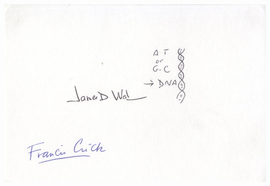 James Watson Signed Drawing of the DNA Double Helix -- Also Signed by Francis Crick