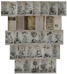 Gorgeous & Important Botanical Book From 1727, Phytographia curiosa by Abraham Munting -- With 245 Engraved Folio Plates