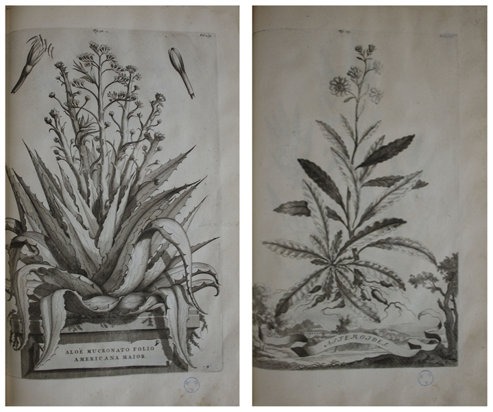 Gorgeous & Important Botanical Book From 1727, ''Phytographia curiosa'' by Abraham Munting -- With 245 Engraved Folio Plates