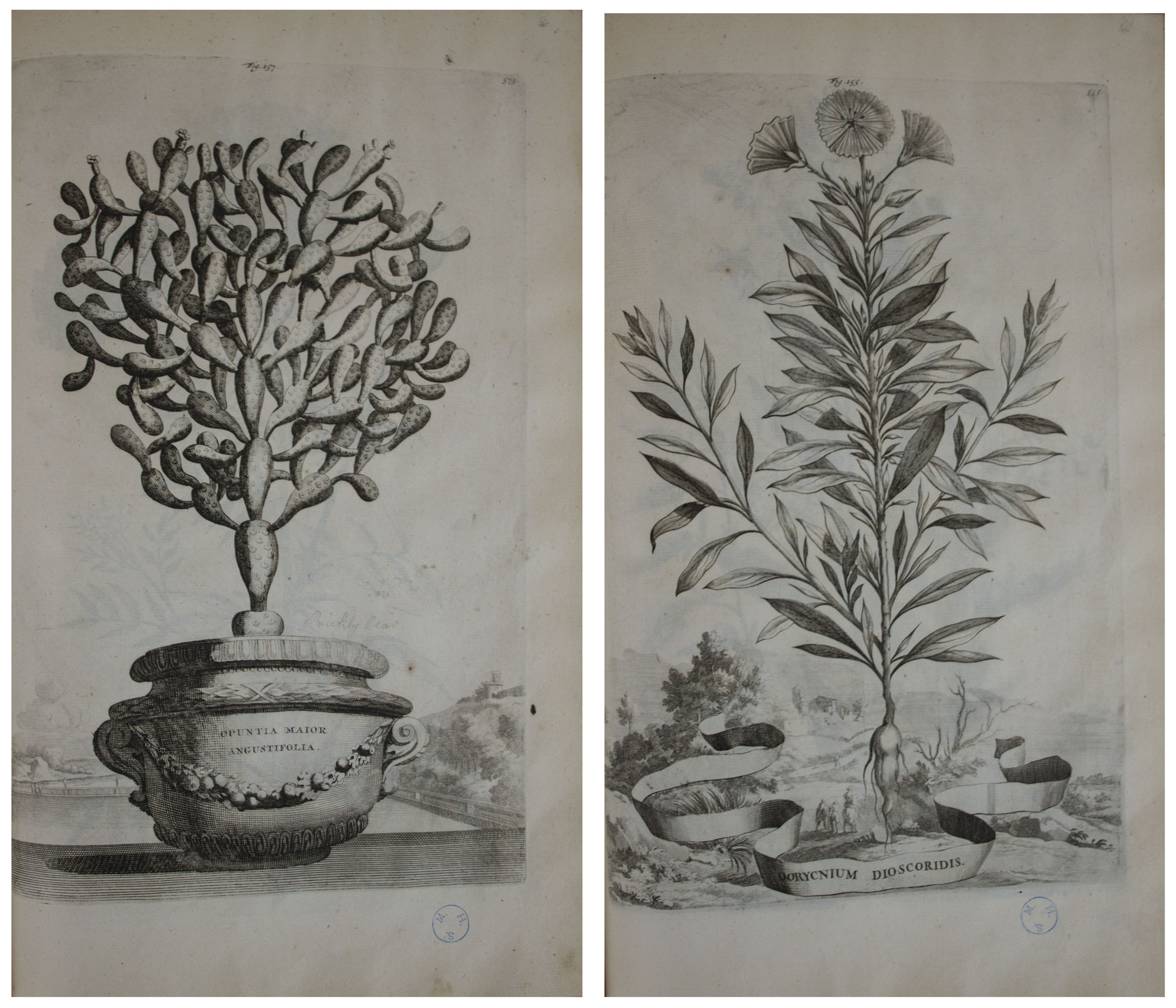 ... Gorgeous & Important Botanical Book From 1727, ''Phytographia curiosa''  by Abraham ...