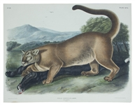 John Audubon 1846 The Cougar Lithograph From The Viviparous Quadrupeds of North America -- Measures 20 x 26